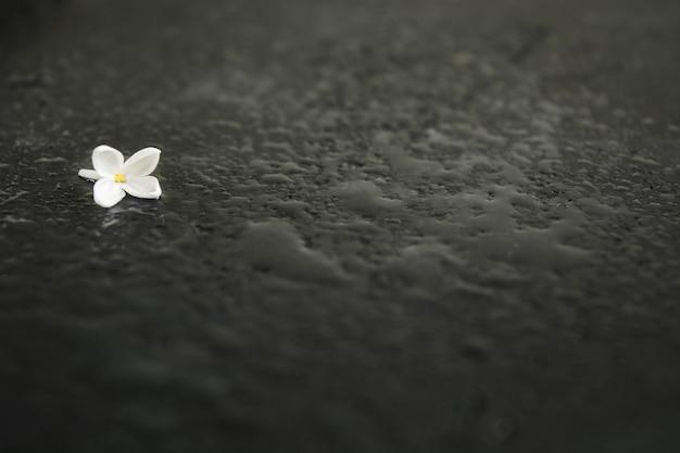 Flor de soledad sobre fondo negro mojado con espacio de copia