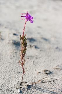 Flor en la tierra seca