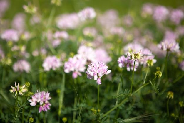 Flor violeta salvaje en el campo