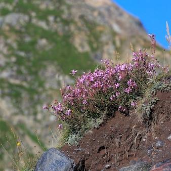 Flora en la ladera del monte elbrus en el norte del cáucaso en rusia