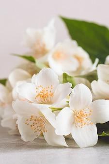Floración tierna flor blanca jazmín.