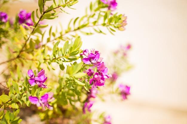 Floral natural. flores delicadas de color púrpura en una luz