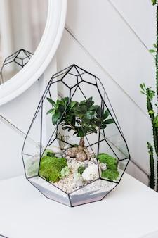 Florario: composición de suculentas, piedra, arena y vidrio, elemento interior, decoración del hogar, terrario de vidrio