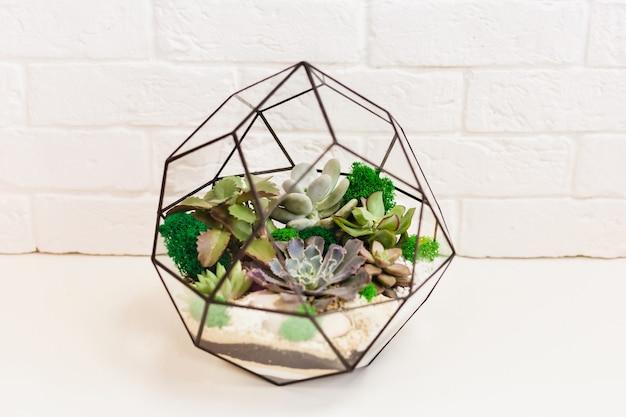 Florarium: composición de suculentas, piedra, arena y vidrio, elemento de interior, decoración del hogar, terario de vidrio