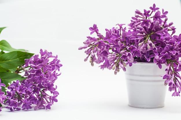 Florece violetas en un pequeño cubo aislado sobre blanco