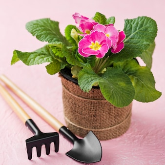 Floreciente maceta junto a herramientas