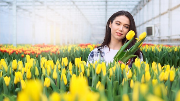Floreria joven escoge tulipanes florecientes en un invernadero