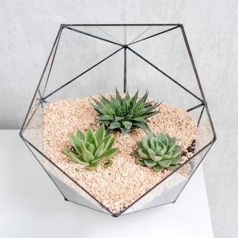 Florero de vidrio florero con plantas suculentas y pequeños cactus en mesa blanca.