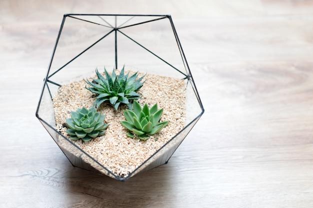 Florero de vidrio con plantas suculentas y pequeños cactus sobre madera