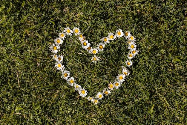 Flores al aire libre