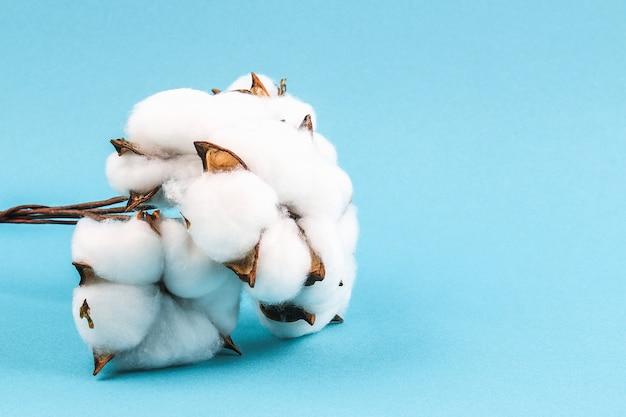 Flores de algodón en azul