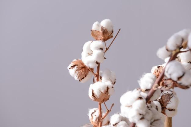 Flores de algodón sobre fondo gris