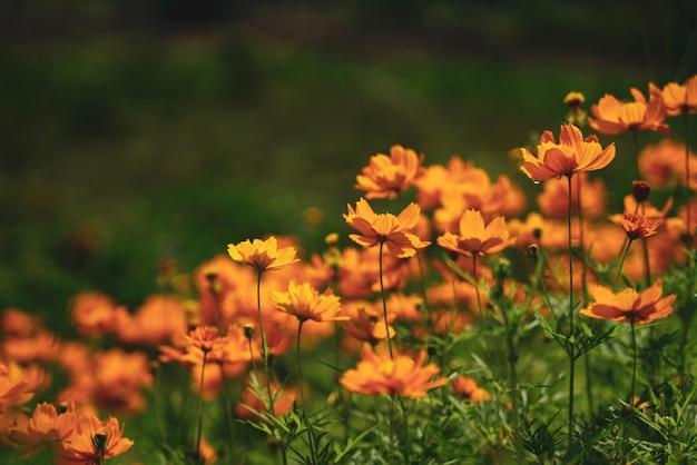 Flores alrededor