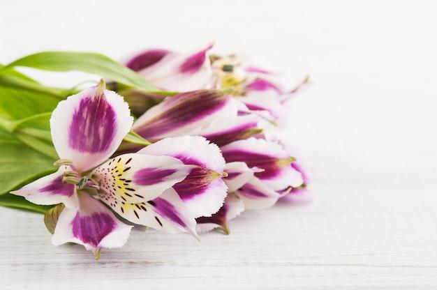 Flores de alstromeria