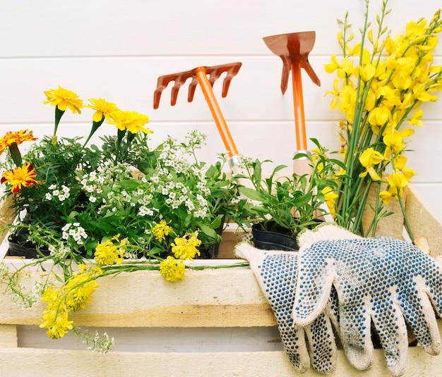 Flores amarillas y equipamiento de jardín en caja de madera.