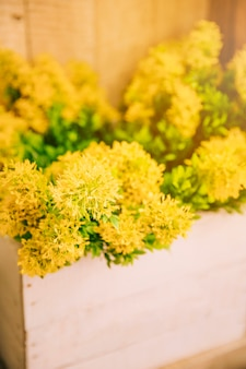 Flores amarillas frescas en el cajón de madera.