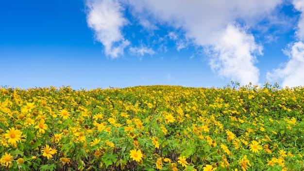 Flores amarillas en la montaña.