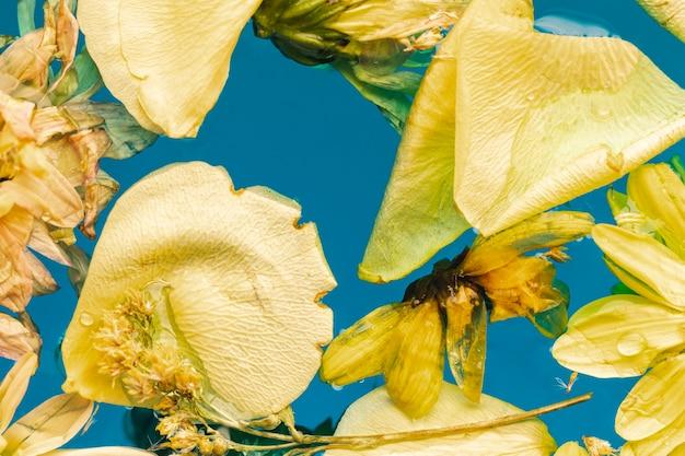 Flores amarillas y pétalos en agua