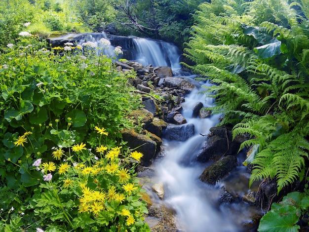 Flores amarillas y plantas verdes cerca de un arroyo de montaña.