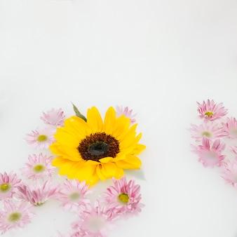 Flores amarillas y rosadas sobre fondo líquido