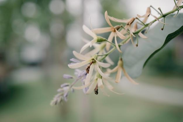 Flores asiáticas tropicales
