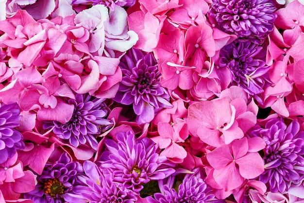 Flores de aster y hortensias. fondo de hermosas flores de color rosa.
