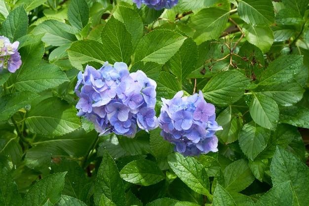Flores azules con hojas verdes