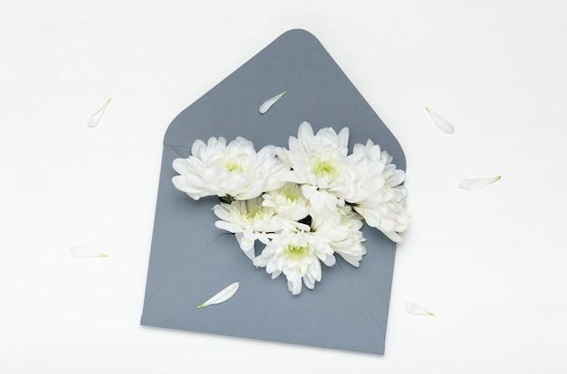 Flores blancas de un crisantemo en un sobre azul sobre un fondo blanco.