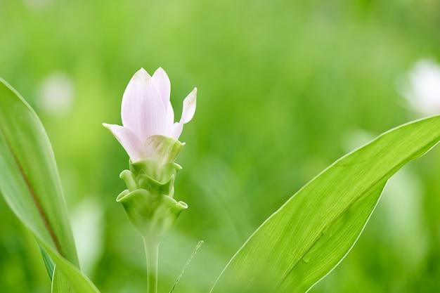 Flores Blancas Fotos y Vectores gratis