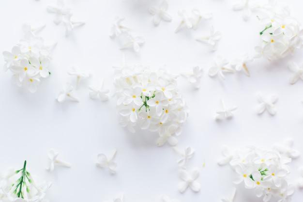 Flores blancas e inflorescencias de cereza de pájaro sobre un fondo blanco.