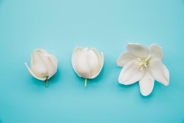 Flores blancas en flor sobre fondo azul.