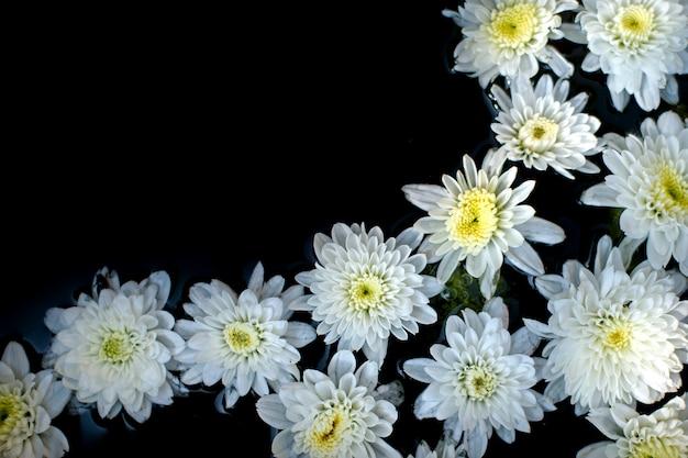 Flores blancas flotando en el agua