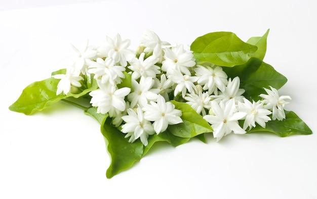 Flores blancas de jazmín flores frescas naturales.