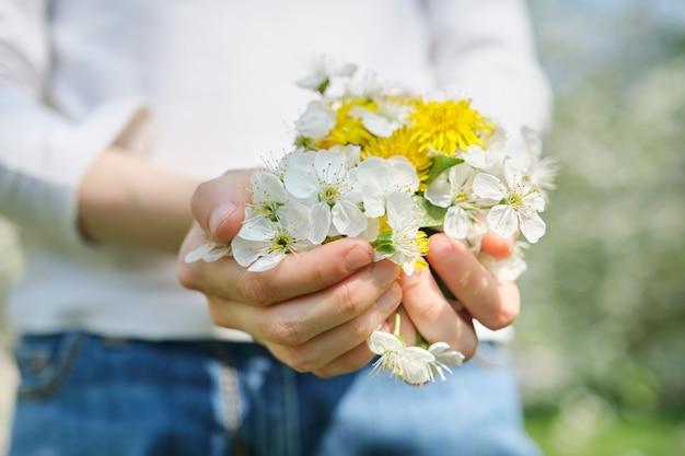 Flores blancas de primavera de cereza y diente de león amarillo en manos de niña