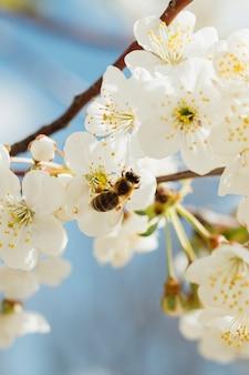 Flores blancas en una rama
