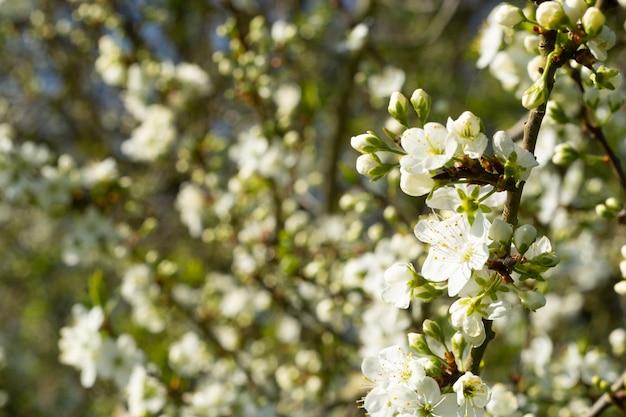 Flores blancas sobre fondo de árbol