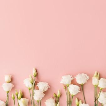 Flores blancas sobre fondo rosa
