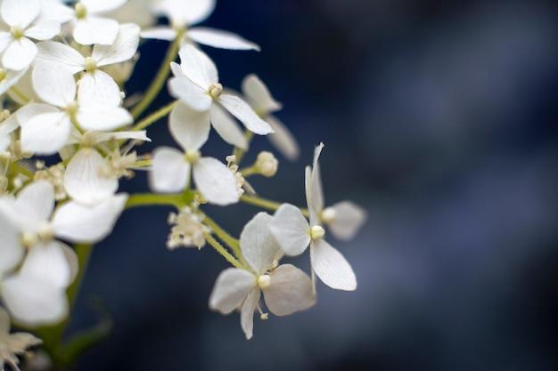 Flores blancas tiernas fondo floral romántico con copyspace