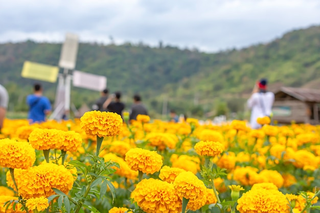 Flores de caléndula amarilla o tagetes erecta y turistas borrosas.