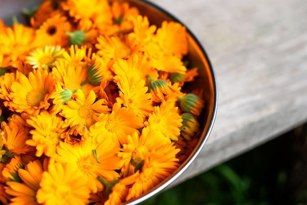 Flores de caléndula recién recogidas. en el biocentro