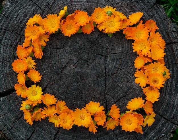 Flores de caléndula en tocón de madera en un marco. planta medicinal