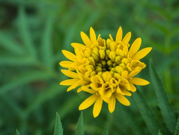 Flores de caléndulas en el jardín.