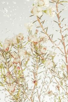 Flores de cera blanca fresca en agua cubierta con burbujas de aire