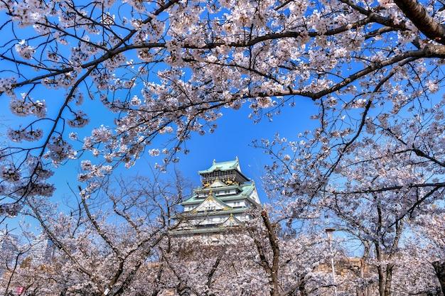 Flores de cerezo y castillo en osaka, japón.