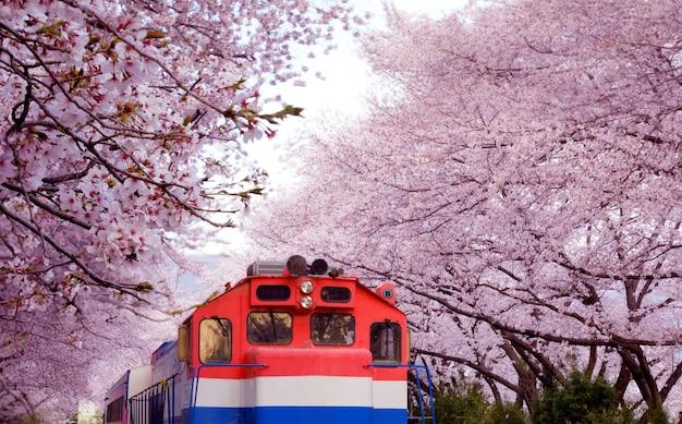 Flores de cerezo en flor