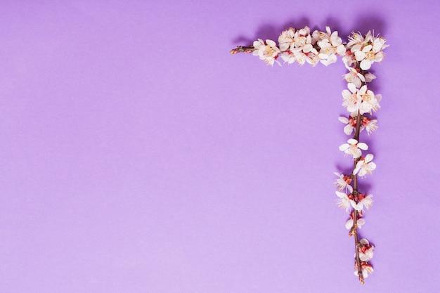 Flores de cerezo sobre papel violeta