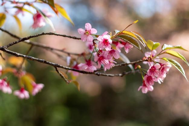 Flores de ciruelo brillando en el cielo azul