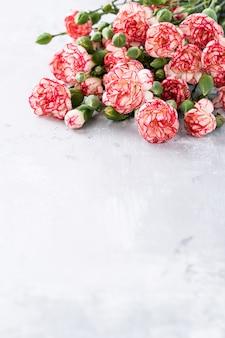 Flores de clavel rosa