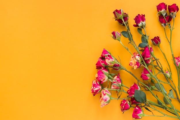 Flores claveles rojas con fondo naranja espacio de copia