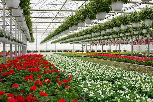 Flores de color en gran invernadero moderno